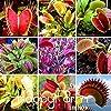 PLATのFIRM:新しい種2015年3 NDS Flytrap種子盆栽鉢植えDionaea Muscipulaシードシードテラスガーデン肉食シード種子100個!