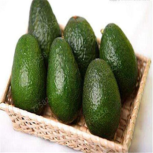 2-delige Sale Promoties Rare Mini Avocado plant plant Delicious Fruit van de Peer Gemakkelijk te kweken voor Home Garden Germ Bonsai gratis verzending: 4