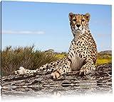 Gepard in Savanne Format: 120x80 auf Leinwand, XXL riesige