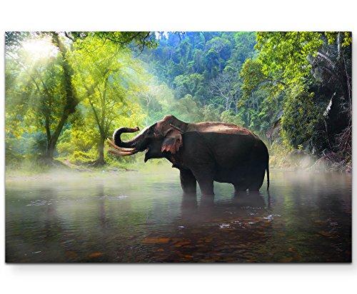 Paul Sinus Art Leinwandbilder   Bilder Leinwand 120x80cm Elefant im Dschungel