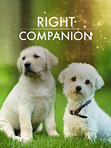 The Right Companion