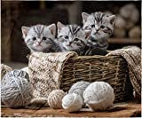INTIMO Kitten Love Cute Kitty Cat Blanket Super Soft Silk Touch Plush Fleece Throw 50' X 60'