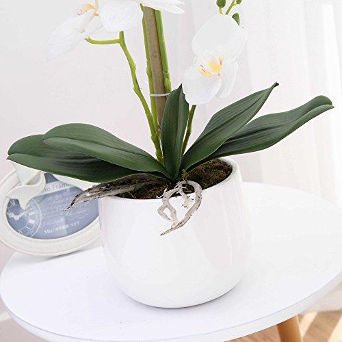LIVILAN Large Dual Stem Silk Phalaenopsis Arrangements, Realistic Orchid in White Ceramic Vase Artificial Flower Decoration, White