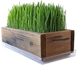 Reclaimed Barnwood Style Planter Wheatgrass Kit - Rich Brown - Grow Wheat Grass - for Pet / Dog / Cat Grass - Decorative & Ornamental - Juice - Organic Seeds