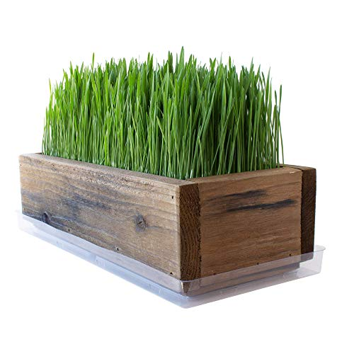 Reclaimed Barnwood Style Planter Wheatgrass Kit - Rich Brown...
