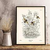 Bilder,Poster Kunstdrucke,Druckgrafik Natur Bildung