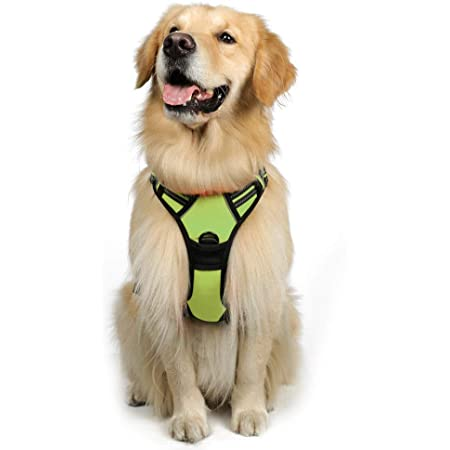rabbitgoo Dog Harness, No-Pull Pet Harness with 2 Leash Clips, Adjustable Soft Padded Dog Vest, Reflective No-Choke Pet Oxford Vest with Easy Control Handle for Large Dogs, Green, XL