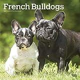 French Bulldogs - Französische Bulldoggen 2021 - 18-Monatskalender mit freier DogDays-App: Original BrownTrout-Kalender [Mehrsprachig] [Kalender]