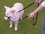 Company of Animals HALTI Jefe de Entrenamiento, Negro, L
