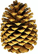 3 Big Premium Tabletop Pine Cones for Holiday Decor