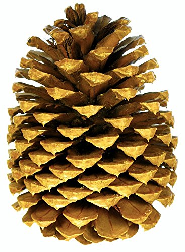 3 Big Premium Tabletop Pine Cones for Holiday Decor