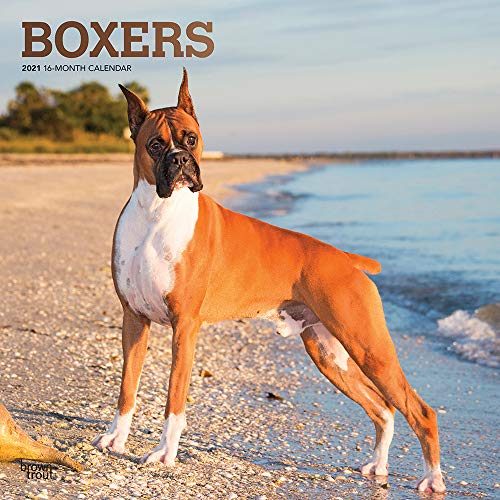 Boxers 2021 12 x 12 Inch Monthly Square Wall Calendar with Foil Stamped Cover, Animals Dog Breeds