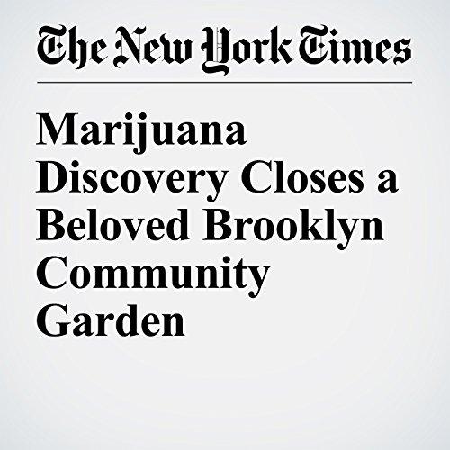 Marijuana Discovery Closes a Beloved Brooklyn Community Garden audiobook cover art