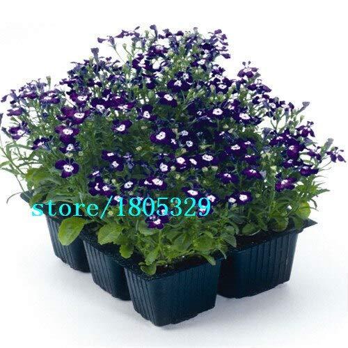 Verde: Lobelia Erinus Sementes 100 piezas Sementes De Flores Diy Nuevo hogar Jardim Bonsai Cor Da Mistura De Flores Bonitas Frete Gr & Aacute; Tis