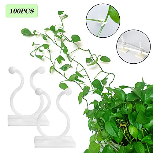 100Pcs Plant Climbing Wall Fixture Clips,Invisible Wall Vines Fixture Wall Self-Adhesive Hook,Vine Plant Climbing Plant Support Clips Holder for Home Decoration