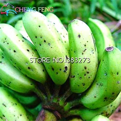 ShopMeeko Seeds:30/Bag Banana Tree Plants Fruit Bonsai Rare Small Mini Hainan Chinese Banana Plants Musa Bonsai Dwarf Basjoo Outdoor Garden * p : Yellow