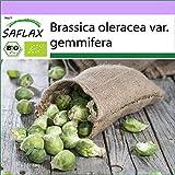 SAFLAX - BIO - Cavoletti di Bruxelles - Groninger - 30 semi - Brassica oleracea var. gemmifera