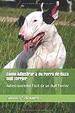 Cómo Adiestrar a Un Perro de Raza Bull Terrier: Adiestramiento Fácil de un Bull Terrier