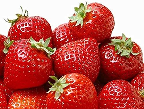 500 semillas de fresas para plantar la planta perpetua, jardín de casa, dulce y sabroso.