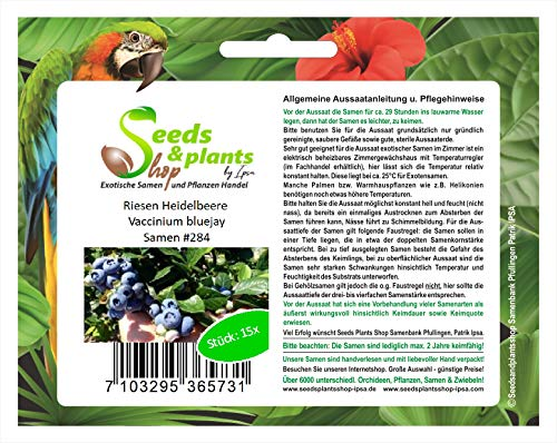 Stk - 15x Riesen Heidelbeere Vaccinium bluejay Obst Pflanzen - Samen #284 - Seeds Plants Shop Samenbank Pfullingen Patrik Ipsa