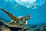 Schildkröte Meer Unterwasser XXL Wandbild Foto Poster
