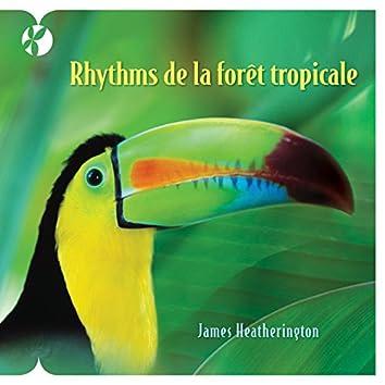 Rhythmes de la forêt tropicale