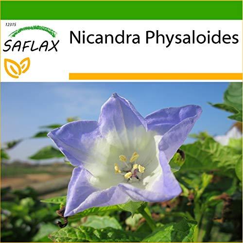 SAFLAX - Blaue Lampionblume - 100 Samen - Mit keimfreiem Anzuchtsubstrat - Nicandra physaloides