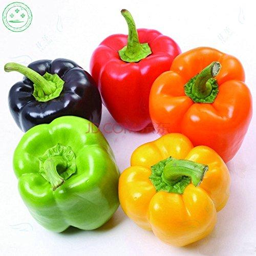 Promotion colorés Graines Poivron, orange rouge vert violet jaune noir blanc doux mélange Poivron Graines - 20 W40 végétale
