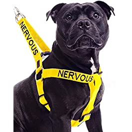 NERVOUS (Give Me Space) Yellow Colour Coded Non Pull L-XL Dog Harness PREVENTS Accidents By Warning Others Of Your Dog In Advance