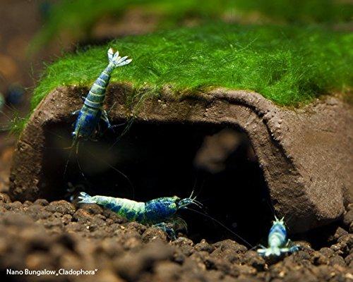 Garnelio - Nano-Bungalow bewachsen - Moosauswahl - Aquarium Deko, Moos:Cladophora