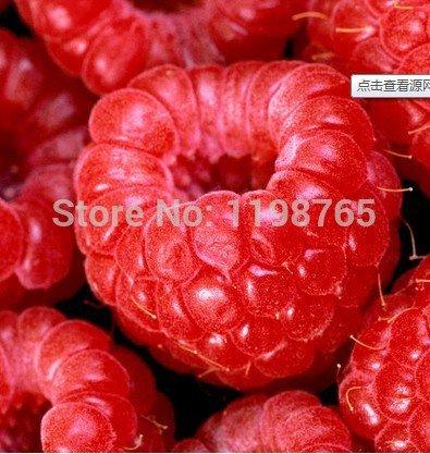 100% 100pcs Framboise haute qualité de semences de Super Big Framboise Graines de fruits Graines pots de fleurs Strawberry bonsaï Blackberry