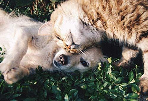 RIII 5D Diamantmalerei Freundliche Hunde und Katzen Kristall Strass Stickerei Bilder DIY Diamantmalerei für Wohnzimmer Dekor Wandaufkleber 40 * 50Cm