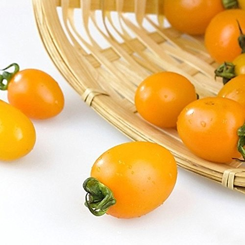 Emballage d'origine tomate Graines Jaune Tomate cerise Bio Petite tomate Balcon Fruits et légumes - environ 20 Pcs