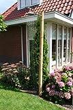 Bambus Gartendusche freistehend Outdoor Dusche