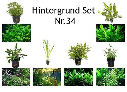 Tropica Hintergrund Set mit 6 Topf Pflanzen Aquariumpflanzenset Nr.34 Wasserpflanzen Aquarium Aquariumpflanzen