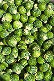 Coles de Bruselas, Brussells Sprout, 65 semillas! Groco...