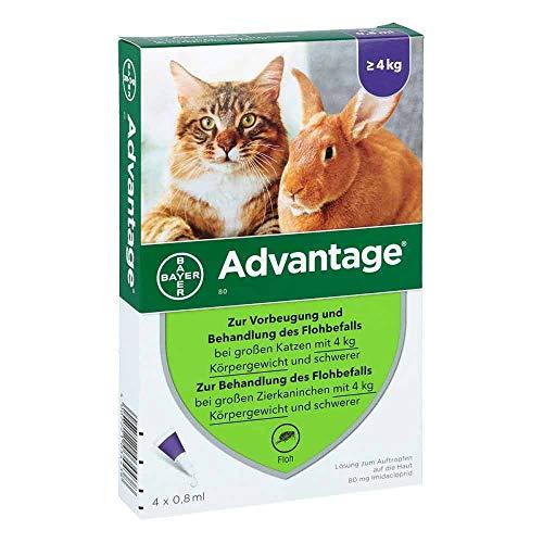 ADVANTAGE 80 mg f.gr.Katzen u.gr.Zierkaninchen 4X0.8 ml