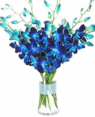 eflowerwholesale - Premium Cut Blue Orchids (10 stems Orchid with Rhinestone Mesh Ribbon Vase) by Eflowerwholesale