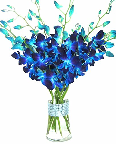 eflowerwholesale - Premium Cut Blue Orchids (10 stems Orchid with Rhinestone Mesh...
