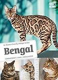 Bengal - Comportement, soins, sociabilisation