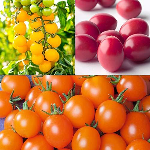 tomgarten Volmary Saatgut Cocktail-Tomate, Nektar-Cherry-Tomate, Pflaumen-Cherry-Tomate Set Garten Pflanzen Tomaten-Exoten