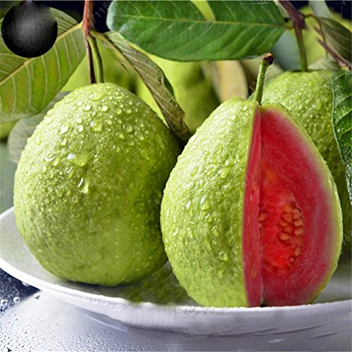 20 pcs/Bag Guava Seed Organic Vegetable Fruit Seeds Bonsai Guava Tree Plant Pot Vegetable and Fruit Seed for Home Garden