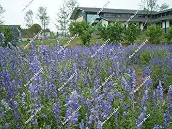 Blau Leinen Blumensamen Balkon Hausgarten Blühende Pflanzen Import Leinsamen Indoor-Party Dekorative Einfache 120 Stück wachsen 10