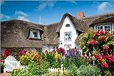 Poster 60 x 40 cm: Amrum - Friesenhaus mit Blumengarten von
