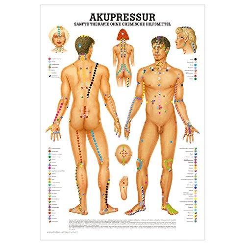 Akupressur Lehrtafel Anatomie 100x70 cm medizinische Lehrmittel