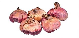 Los bulbos de gladiolo importados son apropiados para plantas en macetas (no es la semilla gladiolo) 2PC bulbos de flores blanco