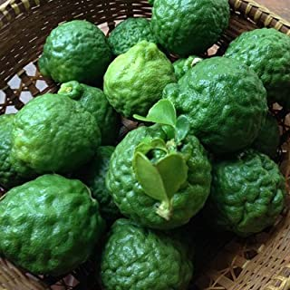 Fresh Kaffir Lime Fruit
