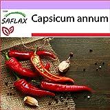 SAFLAX - Chile de cayenne - 20 semillas - Capsicum annum