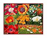30,000+ Seeds Mixed Poppies- Red Flanders Poppy, Symbolic of WWI, Plus Shirley Poppy, and Gold, Orange, White, and Red California Poppy Seeds - Non GMO and Neonicotinoid
