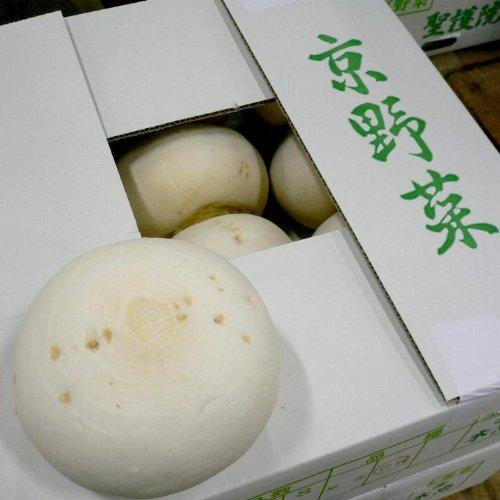 京都産  京野菜  聖護院かぶ  しょうごいんかぶ  2Lサイズ 1玉